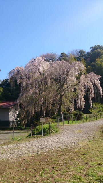 babuac-2014-04-05T19:58:41-1